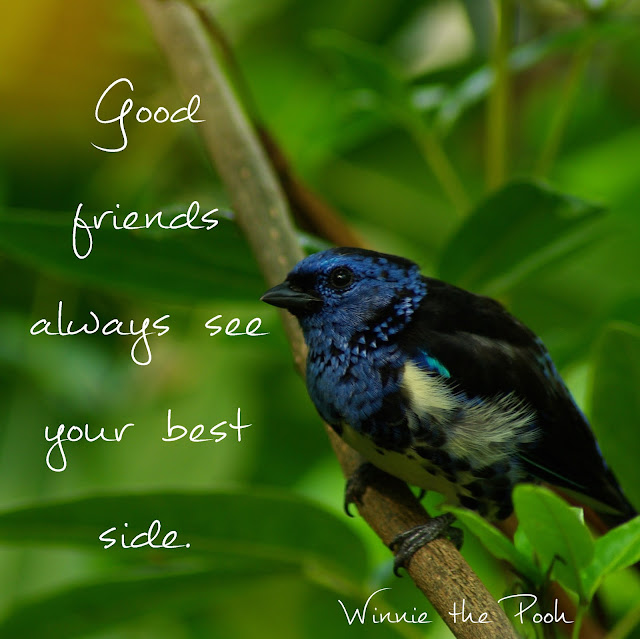 Good friends always see your best side. - Winnie the pooh