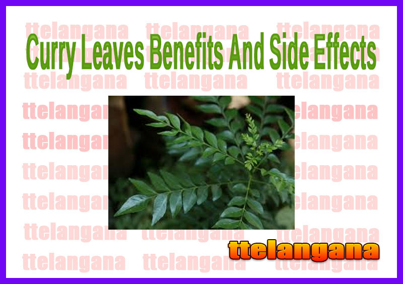 Curry Leaves Benefits And Side Effects