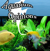 My Aquarium Opinions