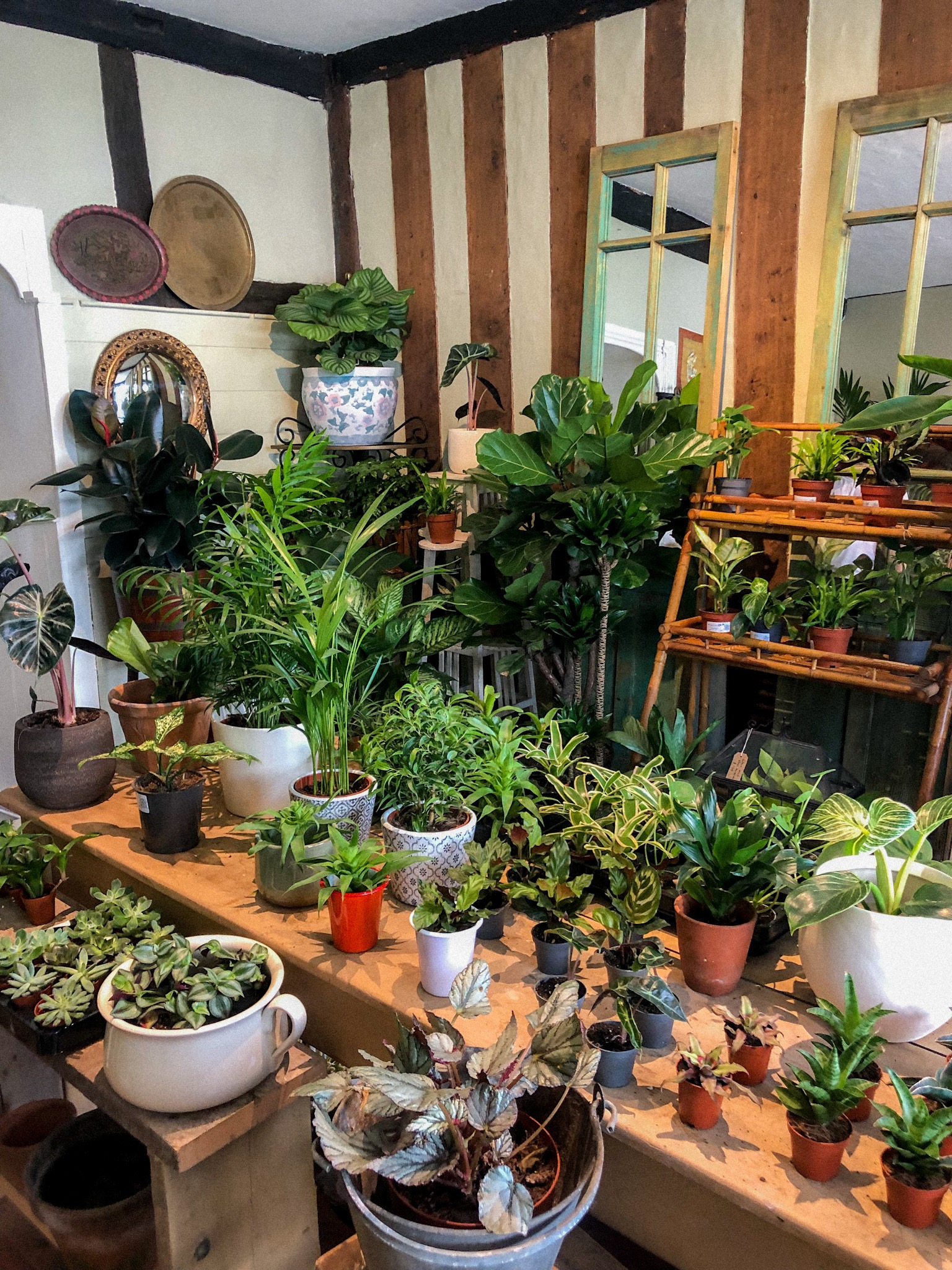 a selection of plants in a shop