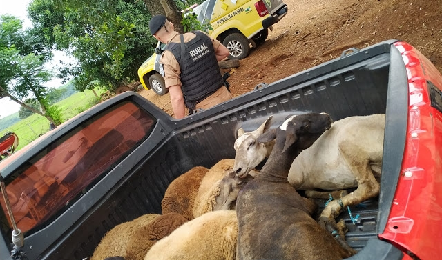 PM encontra animais furtados em área rural de Iretama
