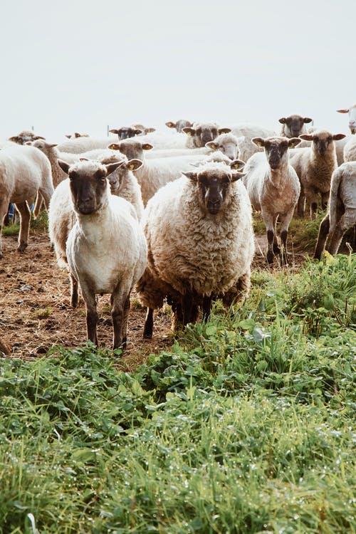 المضافات العلفية لحيوانات المزرعة