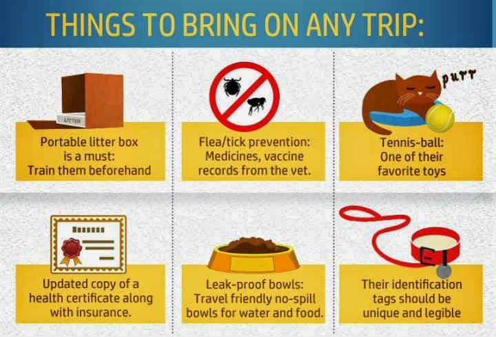 tips berwisata bersama hewan peliharaan
