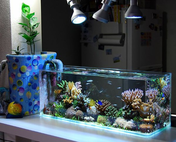 There Are Many Decoration Instruments That People Can Use Today Such As Painting Vase Or Aquarium Among Those It Ears
