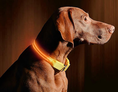 Illumiseen Light Dog Collar