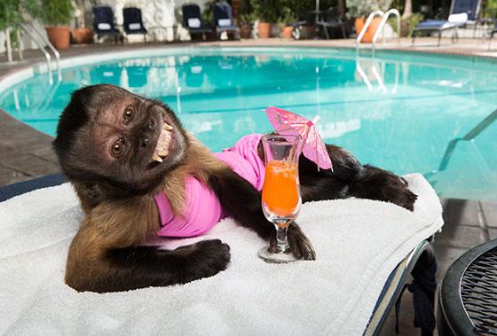 Chú Khỉ Lắm Chiêu