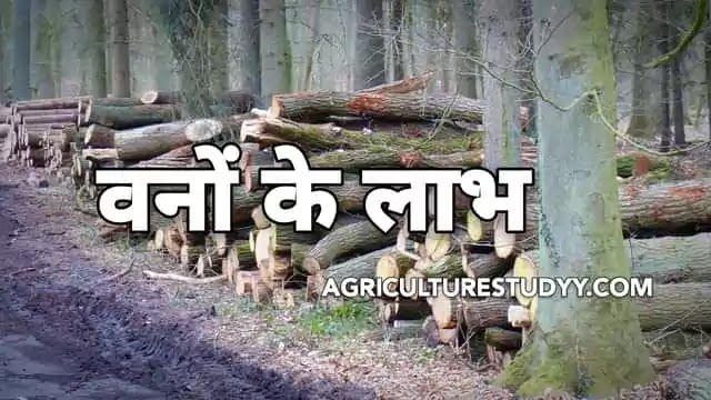 वनों के लाभ ( Benefits of forest in hindi )