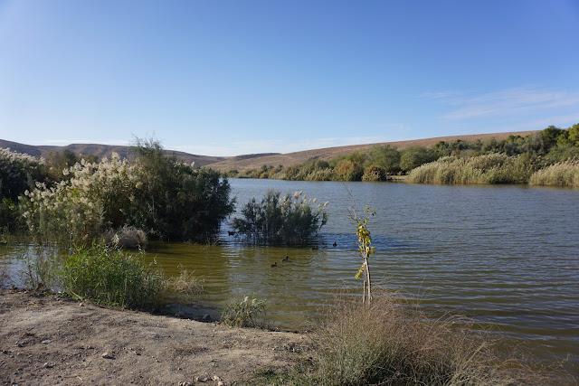 אגם ירוחם בשלהי החורף