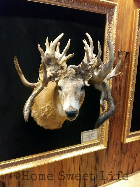 Wonders of Wildlife, Johnny Morris, Wildlife Galleries, Springfield MO, road trip, family trip, Bass Pro Shops, unusual deer