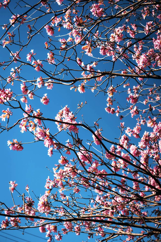 literatura paraibana luar primavera flores estacoes