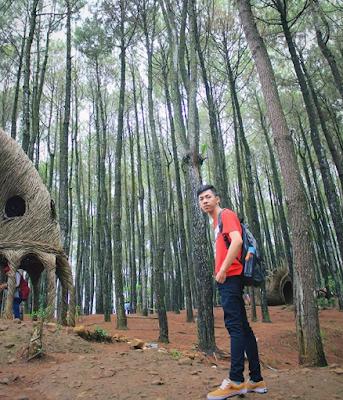 wisata hits hutan pinus pengger