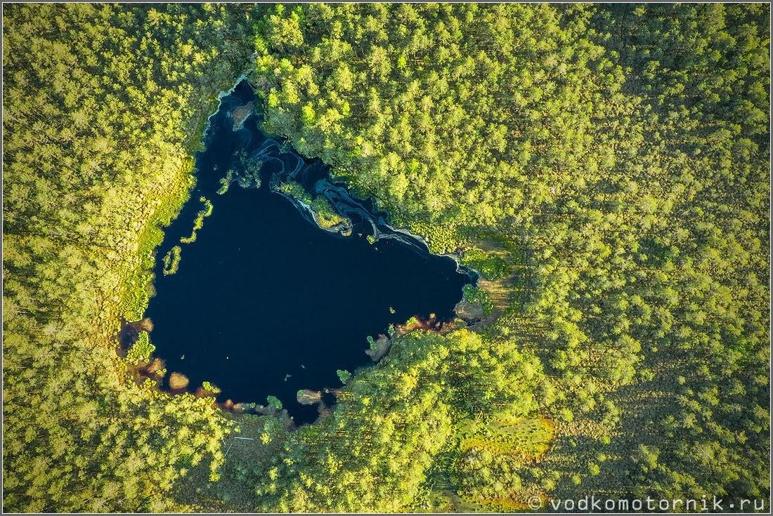 Секретное озеро упрятано в глубине леса