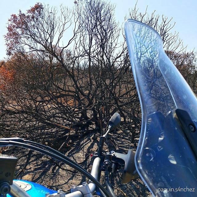 Terreno quemado, Umbría de Fresnedas