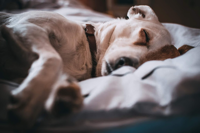What Does Your Dog's Sleeping Position Mean?
