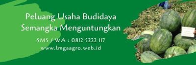 semangka berbiji, tanam semangka ninaku, semangka merah, manfaat semangka, jual benih semangka, toko pertanian, lmga agro