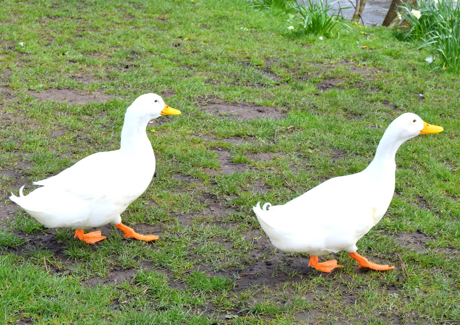 Ducks In A Row: My Sunday Photo: In Bakewell