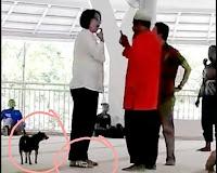Wanita Non Muslim Membawa Anjing ke Masjid