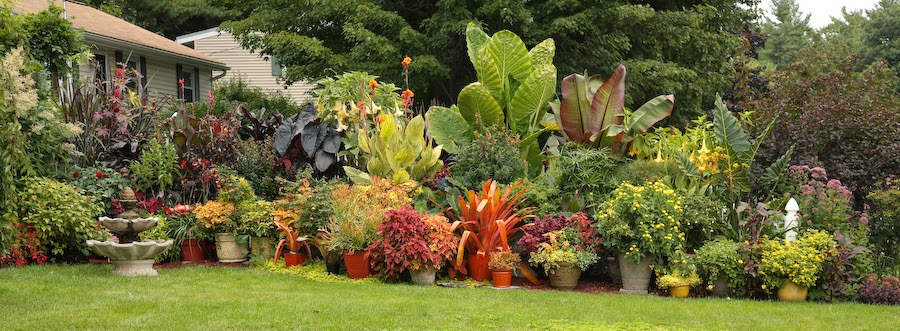 Fortnam Gardens: Tropical Container Border