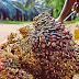 Malaysia Dan Indonesia Rangka Strategi Lindungi Industri Sawit