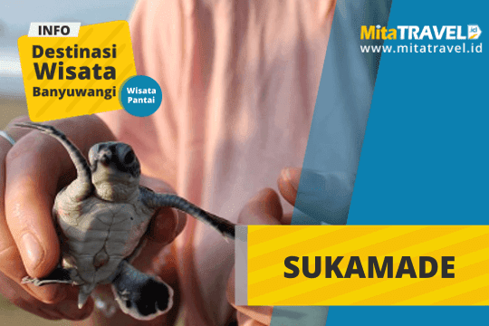 Info Lengkap Wisata Sukamade Banyuwangi Jawa Timur di MitaTRAVEL