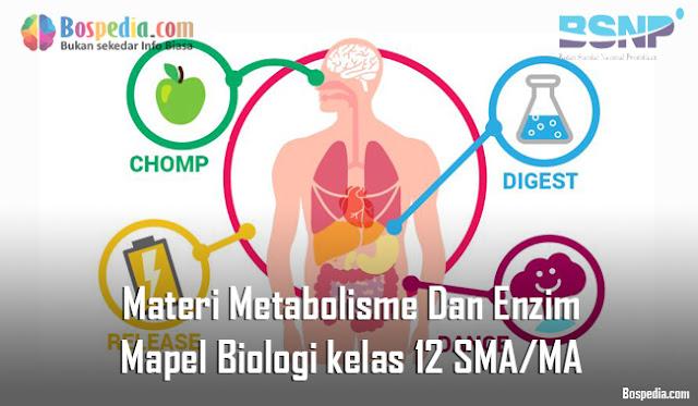 Materi Metabolisme Dan Enzim Mapel Biologi kelas 12 SMA/MA