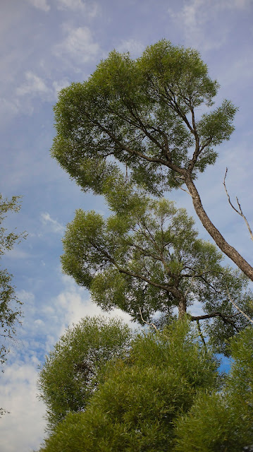 Дерево север Ленинградская область природа