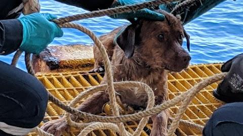 A szárazföldtől 220 kilométerre mentettek ki egy kutyát a tengerből Thaiföldön