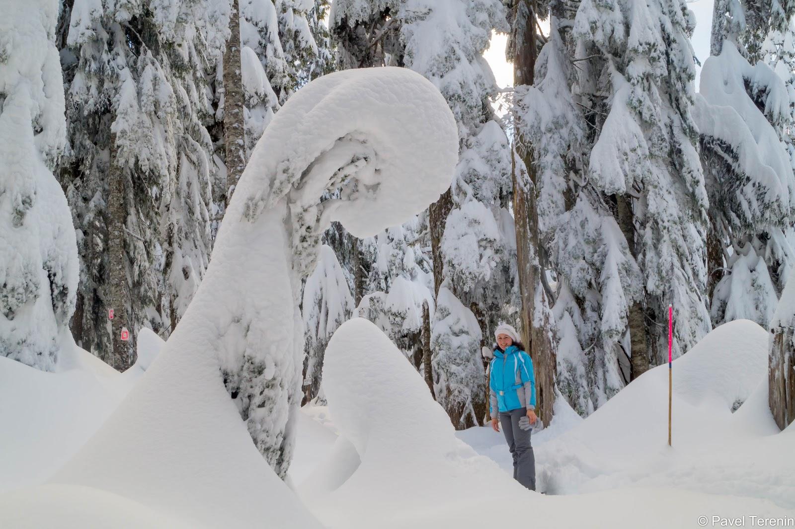 На горе выпало метра три снега. Некоторые деревья на две трти находятся пос снегом.