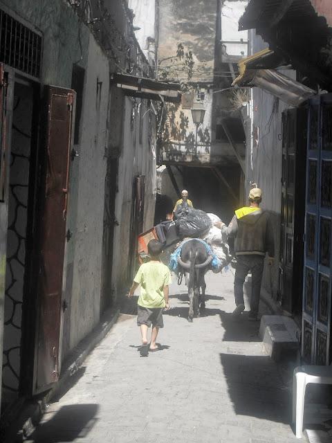 burros en Fez