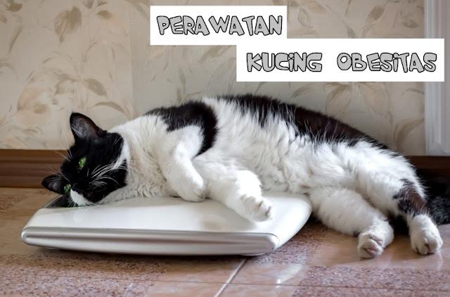 Penanganan Berat Badan Kucing