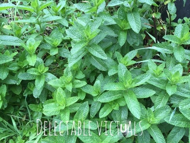 home garden mint thuvaiyal thogayal chutney south indian spicy