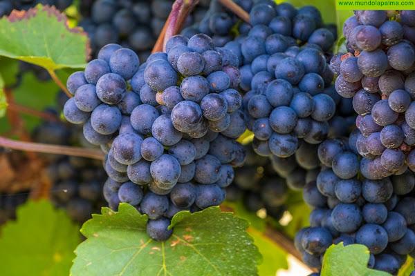 Agricultura convoca ayudas de 3,7 millones al cultivo de la viña por hectárea