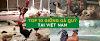 TOP 10 Những giống gà quý hiếm ở Việt Nam có giá trị kinh tế cao