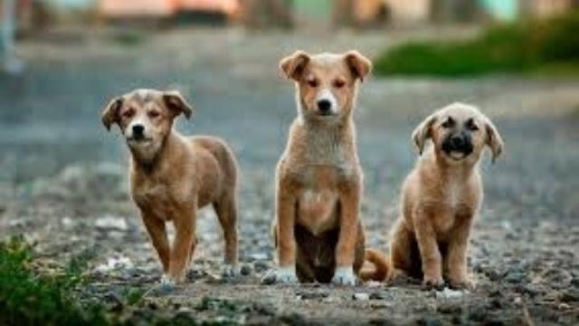 Χαρίζονται σκυλάκια στο Άργος