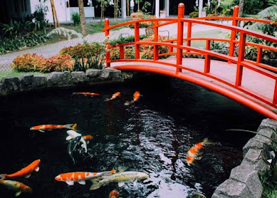 kolam koi dan mini zoo the hill