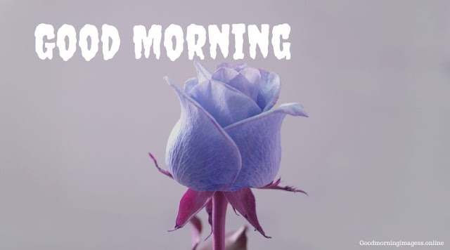 Good Morning Images In Roses 14