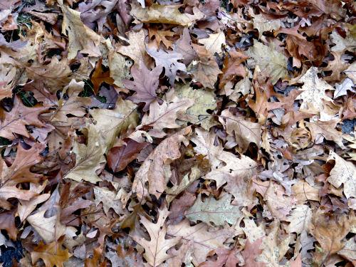 brown fallen leaves