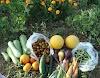 Πικ-Νικ στον 1ο Περιαστικό Λαχανόκηπο Κοζάνης