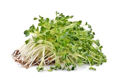 Mengenal Tanaman Alfalfa