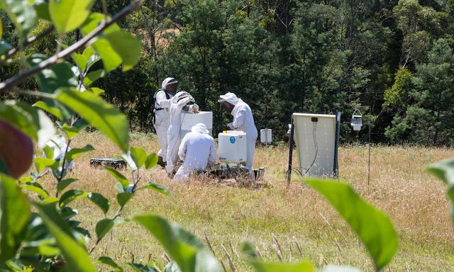 Απίστευτη ανακάλυψη για τις μέλισσες. Δεν θα πιστέψετε τι βρήκαν σε αυτά τα χωράφια όταν...