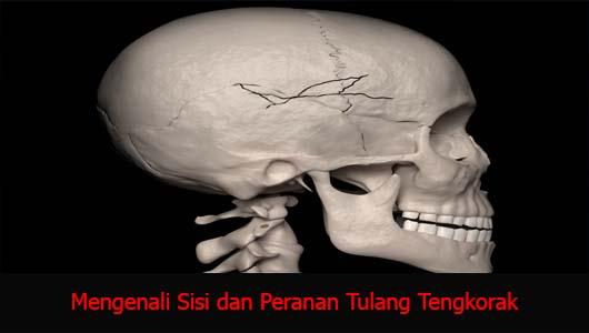 Mengenali Sisi dan Peranan Tulang Tengkorak