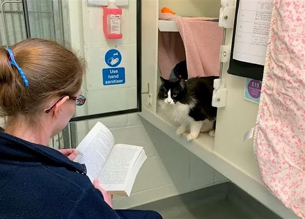RSPCA employee reads to a rescue cat Babs who  is the black and white long-haired cat