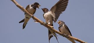 https://www.seo.org/2020/05/08/disfruta-de-las-aves-migratorias-desde-tu-ventana-y-en-tus-paseos