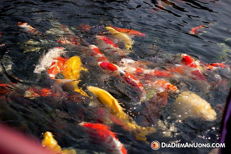 Tham quan Công Viên Cá Koi Rin Rin Park tại - Vườn Nhật Bản cực đ3ã