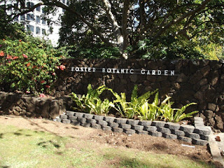 From the street - Foster Botanic Garden, Honolulu, HI