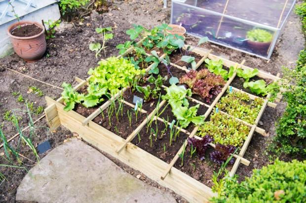 Aprenda a fazer uma horta em apenas um metro quadrado
