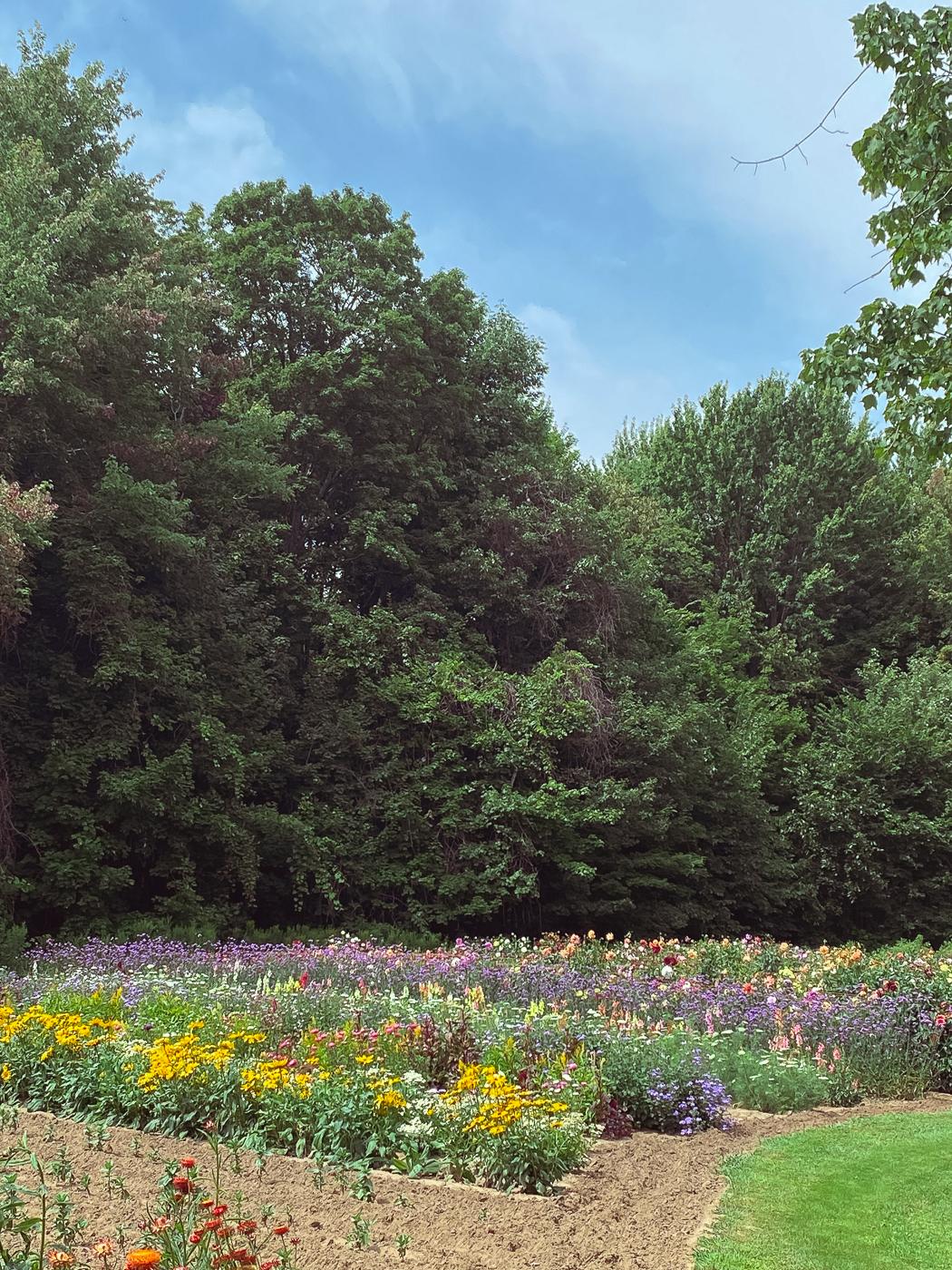 summer garden flowers, blooming flowers, summer flowers that bloom