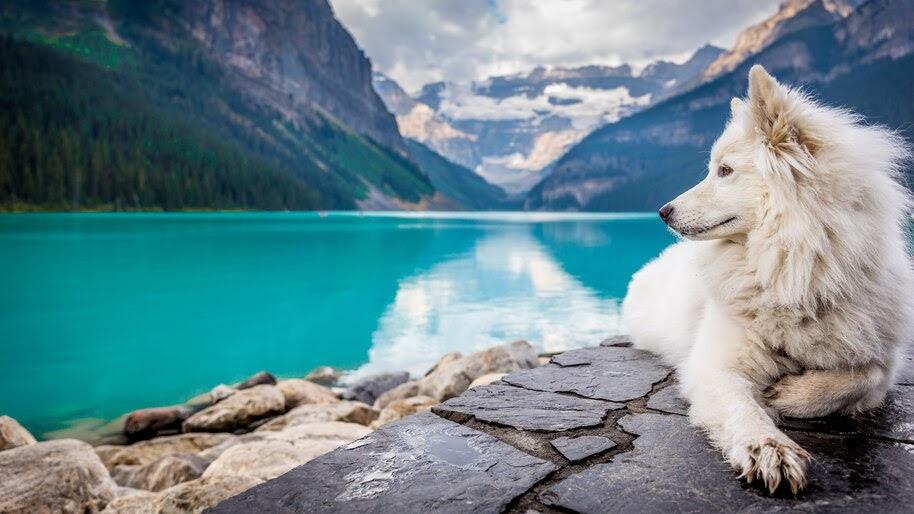 Dog, Lake, Nature, Scenery, 8K, #4.547