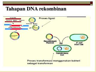 Bioteknologi di bidang kedokteran