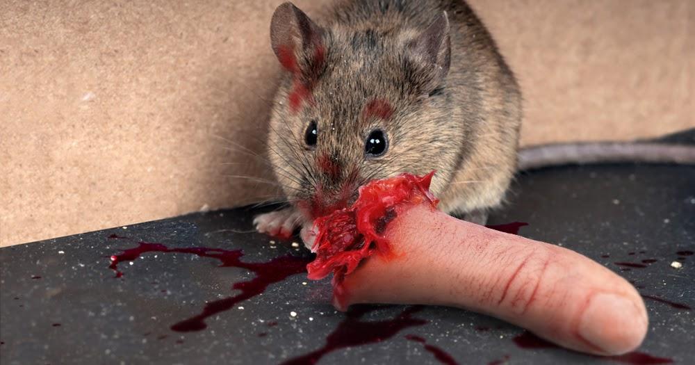 Was Fressen Mäuse der postillon: frau von maus aufgefressen, weil sie nicht sofort